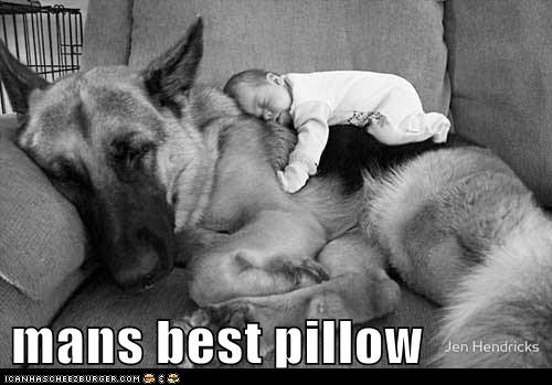 funny-dog-pictures-mans-best-pillow